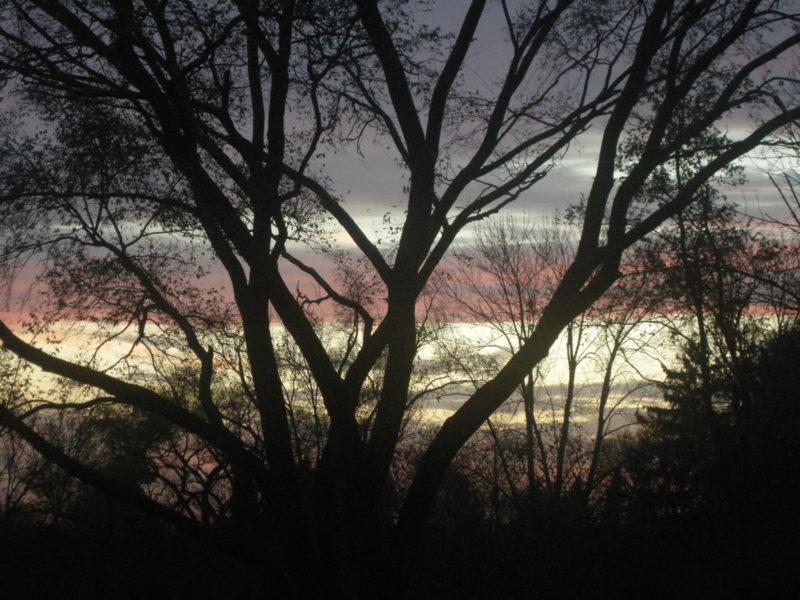 November 11, 2016, Backyard Sky and Trees, (c) MDMikus
