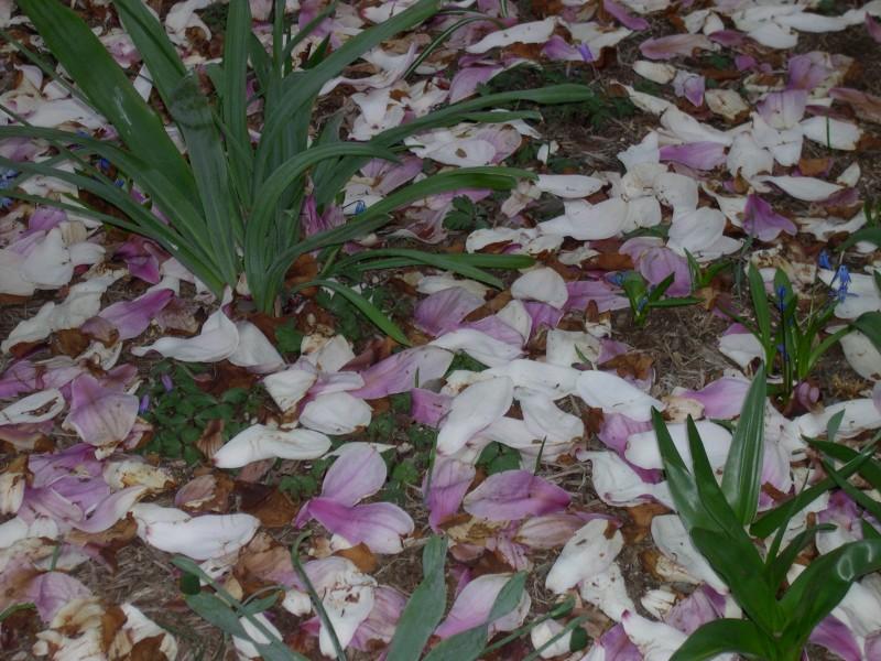 Washington DC in March Margaret Dubay Mikus  Copyright 2004