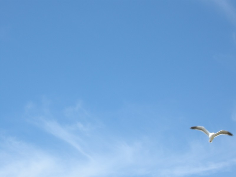 Lone Seagull MDMikus Copyright 2013
